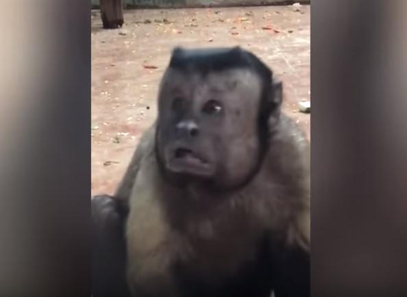 Μια μαϊμού έχει τρελάνει το διαδίκτυο! (vid) | Pagenews.gr