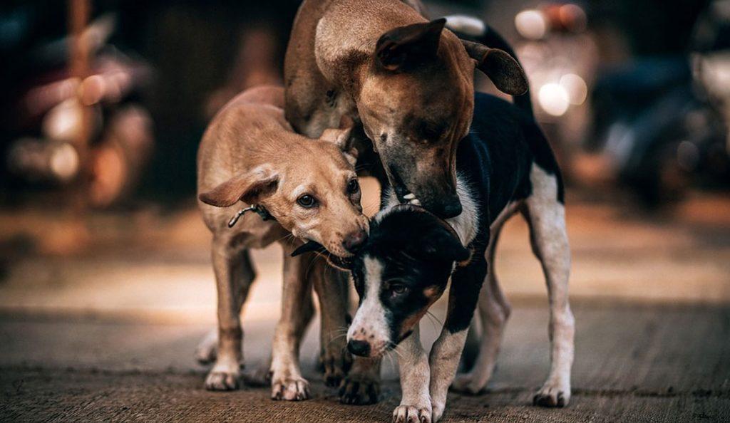 Δήμος Θεσσαλονίκης: Έλεγχοι από μικτά κλιμάκια σε ιδιοκτήτες δεσποζόμενων ζώων   Pagenews.gr