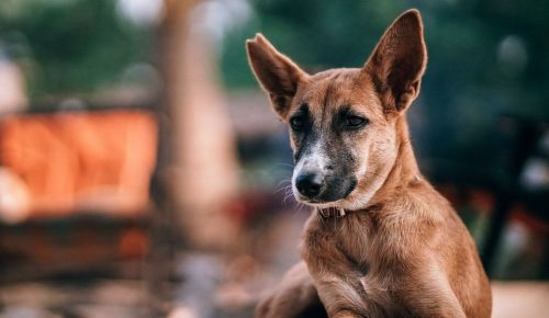 Επιστήμονες δημιουργούν συσκευή με την οσφρητική ικανότητα σκύλου σε περίπτωση σεισμού | Pagenews.gr