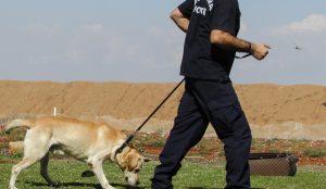 Πέλλα: Σκύλος της αστυνομίας εντόπισε 502 δενδρύλια κάνναβης | Pagenews.gr