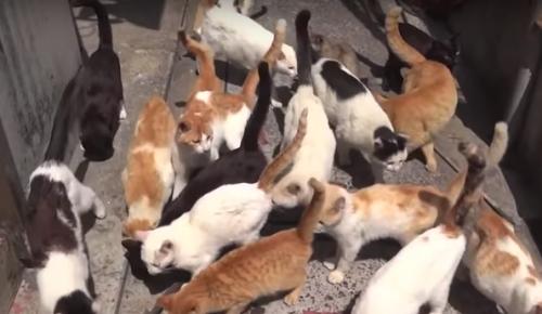 Ρωσία: Πόλη προσέλαβε υπεύθυνο φροντίδας για τις αδέσποτες γάτες | Pagenews.gr