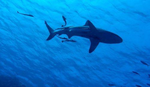 Κρήτη: Έκαναν μπάνιο μέχρι που ένας καρχαρίας τους αναστάτωσε (pics)   Pagenews.gr