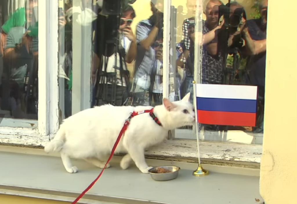Μουντιάλ 2018: Ο κουφός γάτος Αχιλλέας προέβλεψε τον νικητή (vid)   Pagenews.gr