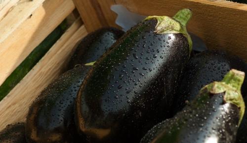 Η συνταγή της ημέρας: Μελιτζανόπιτα | Pagenews.gr