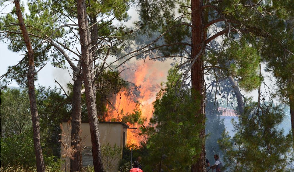Φωτιά τώρα: Πυρκαγιά σε εξέλιξη στην περιοχή Κορυφή της Ηλείας   Pagenews.gr
