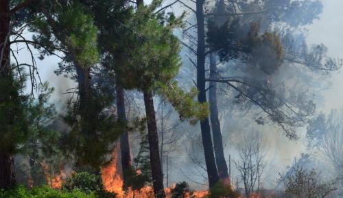 ΦΩΤΙΑ ΤΩΡΑ: Πυρκαγιά σε εξέλιξη στη Θεσσαλονίκη | Pagenews.gr