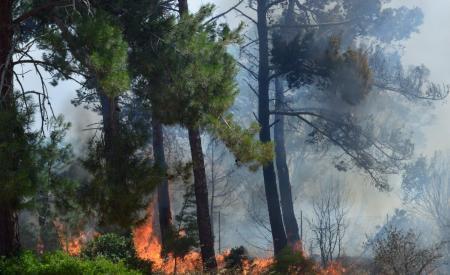 ΦΩΤΙΑ ΤΩΡΑ: Σε εξέλιξη πυρκαγιά στην Πάτρα | Pagenews.gr