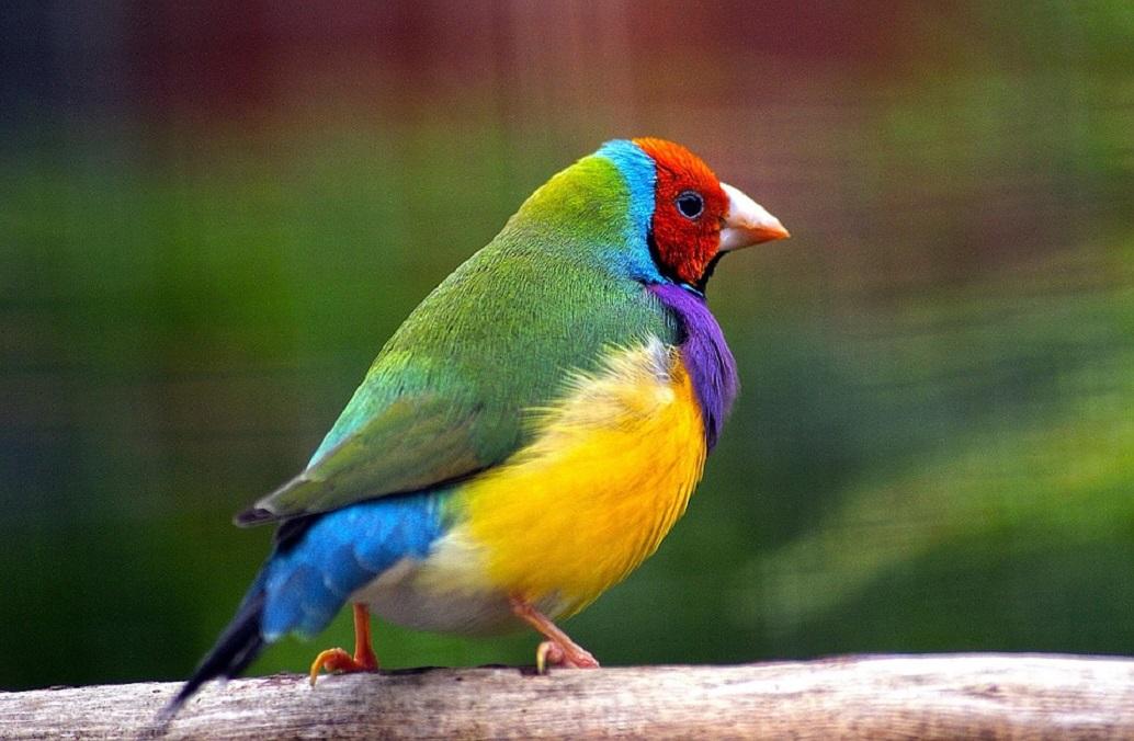 Άσυλο βρήκαν σε βρετανικό ζωολογικό κήπο, εξωτικά πουλιά | Pagenews.gr