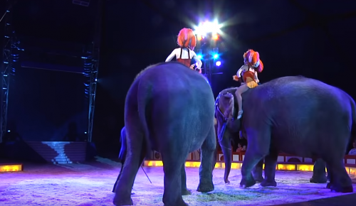 Γερμανία: Τρομακτικό βίντεο – Ελέφαντας σε τσίρκο πέφτει πάνω στο κοινό (vid)   Pagenews.gr
