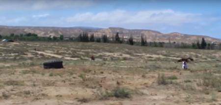 Τεράστιος αετός ορμάει σε 8χρονο κορίτσι (vid)   Pagenews.gr