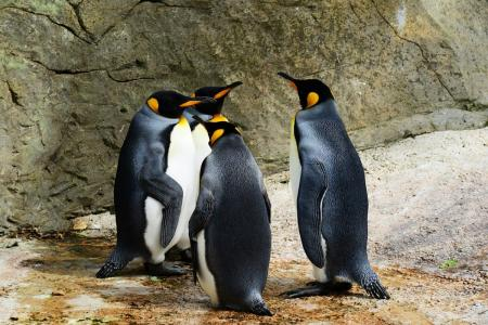 Είχε όνειρο να τραγουδήσει σε πιγκουίνους – Εκτυλίχθηκε σε «εφιάλτη» (vid) | Pagenews.gr