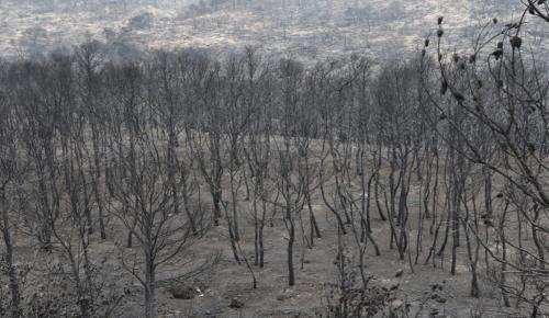 Φωτιά Μάτι: Τι ψάχνουν οι εισαγγελείς στον τόπο της τραγωδίας | Pagenews.gr