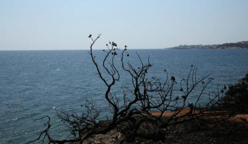 Μάτι: Ελληνική υπηκοότητα στους 3 ψαράδες που έσωσαν δεκάδες πυρόπληκτους | Pagenews.gr