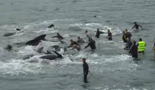 Ένα άρρωστο έθιμο στις νήσους Φερόες – Ομαδικές σφαγές φαλαινών αλλάζουν χρώμα στη θάλασσα   Pagenews.gr