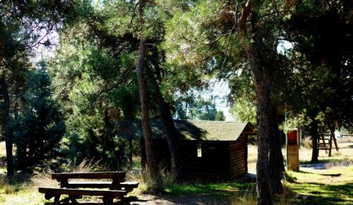 Δήμος Θεσσαλονίκης: Εργασίες καθαριότητας στο δάσος του Σέιχ Σου (vid) | Pagenews.gr