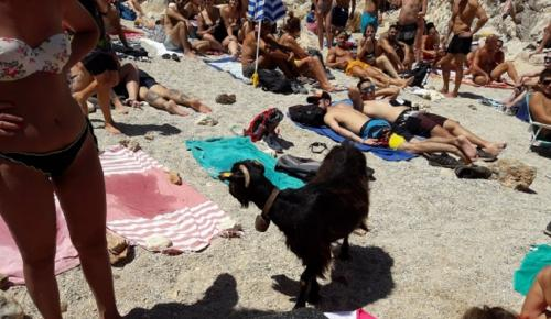 Κρήτη: Κατσίκα τρώει φαγητό από λουόμενους και σκορπάει γέλιο (vids)   Pagenews.gr