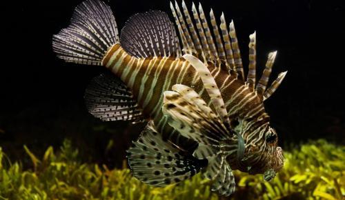 Η κλιματική αλλαγή φέρνει τοξικά ψάρια στο Αιγαίο | Pagenews.gr