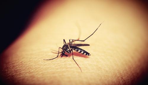 20 Αυγούστου: Παγκόσμια Ημέρα κατά των Κουνουπιών | Pagenews.gr