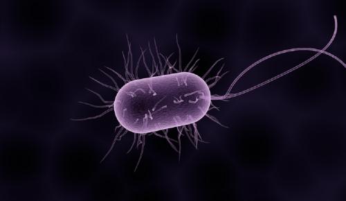 Έρευνα: Η απίστευτη λειτουργία των βακτηρίων του εντέρου   Pagenews.gr