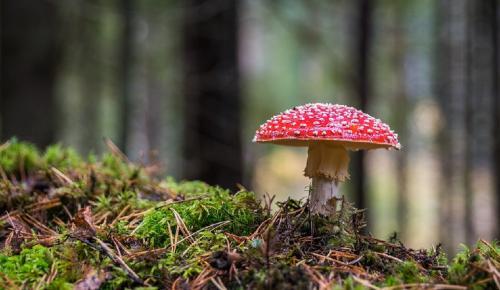 Περισσότεροι από 144.000 οι αναγνωρισμένοι μύκητες στον κόσμο | Pagenews.gr