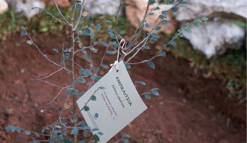 Αμπελιτσιά:  Γιατί φύτεψαν αυτό το δέντρο στη μνήμη του Κωνσταντίνου Μητσοτάκη   Pagenews.gr