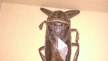 Λαμία: Τι ήταν τελικά το γιγάντιο σαρκοφάγο έντομο έξω από το δημαρχείο; | Pagenews.gr