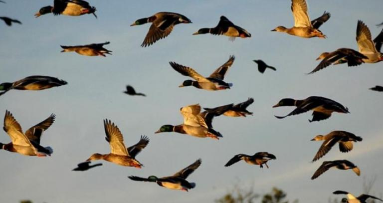 13 Οκτωβρίου: Παγκόσμια Ημέρα για τα Μεταναστευτικά Πουλιά | Pagenews.gr