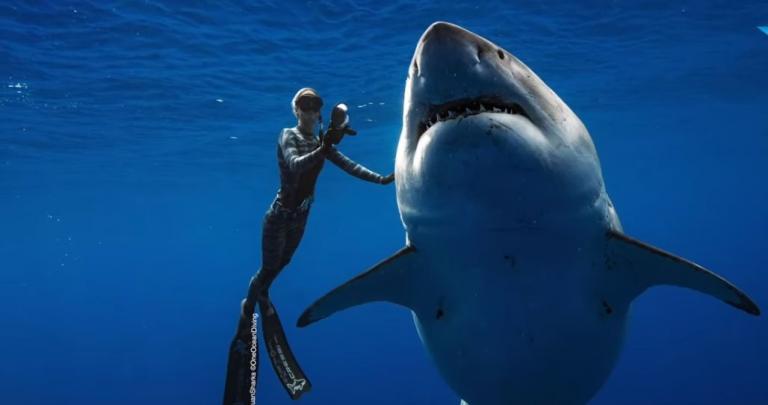 Τολμηροί δύτες κολύμπησαν δίπλα σε γιγαντιαίο μεγάλο λευκό καρχαρία – Που έγινε αυτό (vid) | Pagenews.gr