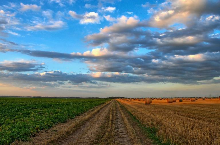Δήμος Ιωαννιτών: Παραχωρεί ανεκμετάλλευτη αγροτική γη σε άνεργους | Pagenews.gr