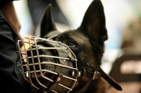 Κίνα σκύλος: Κλωνοποίησαν τη «Σέρλοκ Χολμς των αστυνομικών σκύλων» | Pagenews.gr