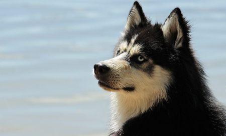 Στρες: Τι μπορεί να πάθει ο σκύλος όταν αγχώνεται το αφεντικό του | Pagenews.gr