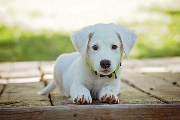 Πώς τα σκυλιά «κλέβουν» τις καρδιές των ανθρώπων με μία ματιά   Pagenews.gr