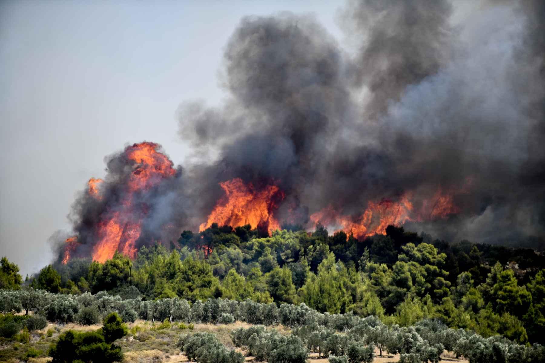 Πυρκαγιά έξω από την Αταλάντη(ΦΩΤΟ)