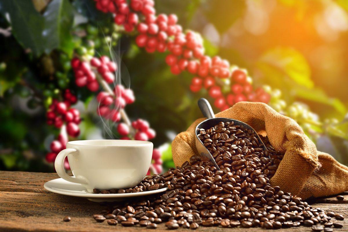 Καφές: Οι μεταλλάξεις της «σκουριάς» απειλούν τα καφεόδεντρα